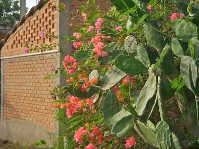 Cactus_and_brick_wall_sayulita