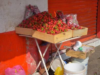 Strawberry_vendor_pitillal_puerto_v